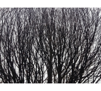Stromy-1 STERNIK