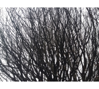 Stromy-2 STERNIK